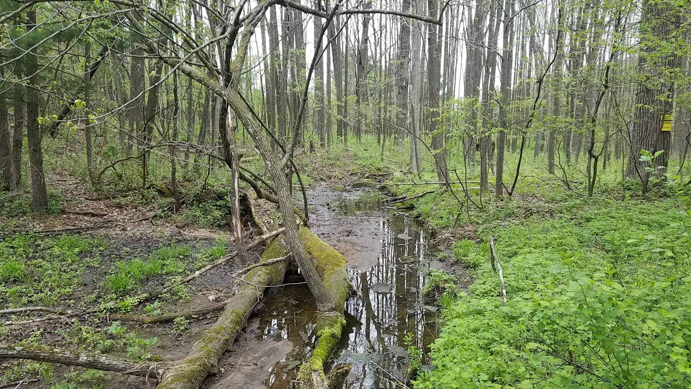 Helianthus   Ecological Design and Restoration