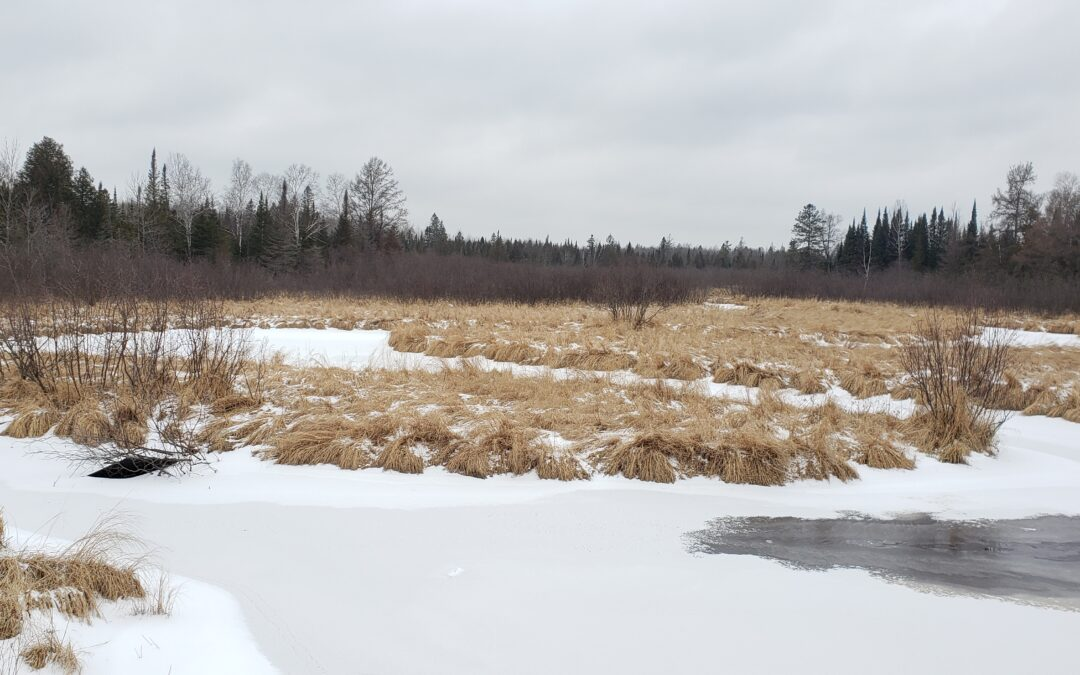 Bogs and Fens